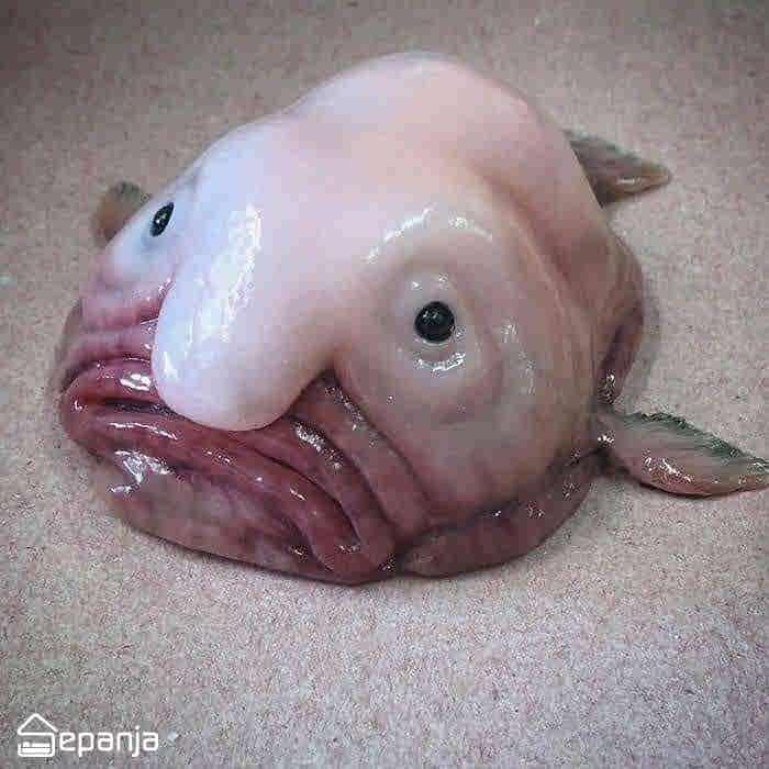 قطره ماهی