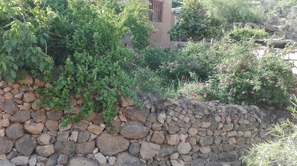 بوم گردی اتاق سنتی در داراب - کوهستان2